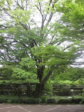 ookeyaki IMG_1810.jpg